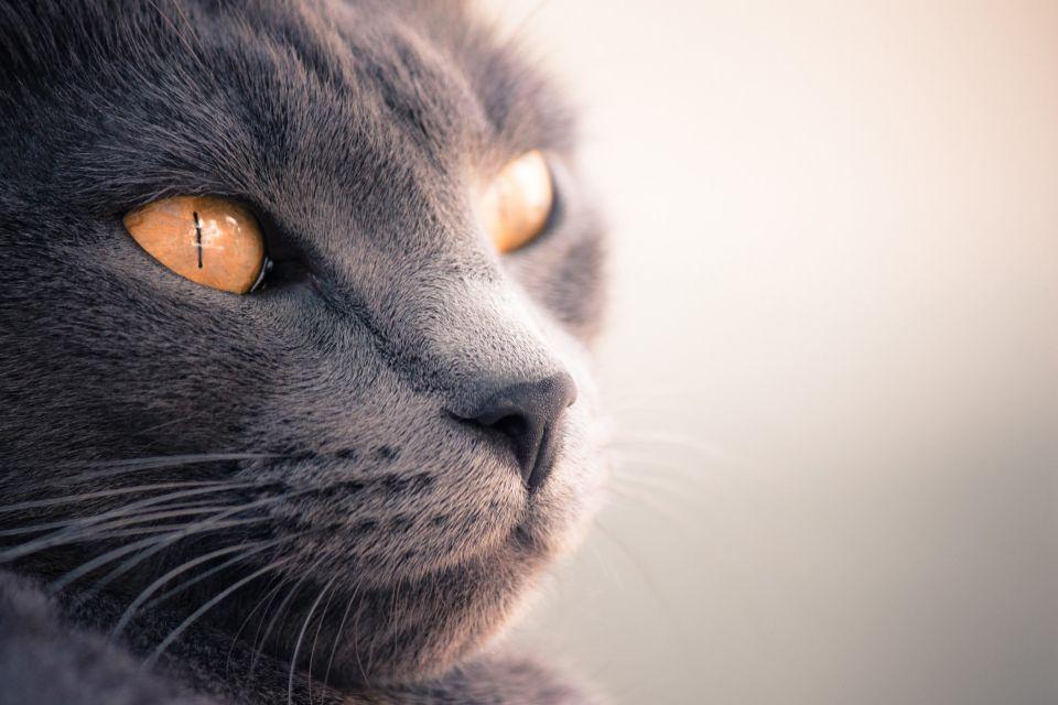 cat-245374