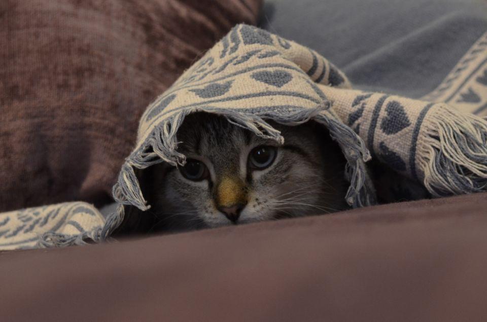 cat-393294
