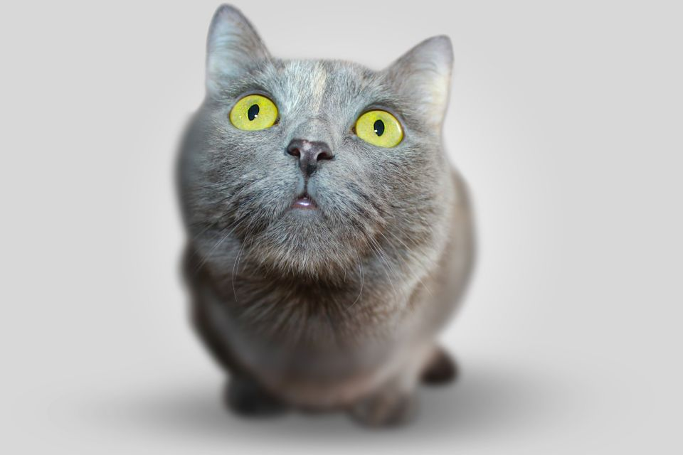 cat-351926
