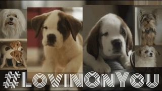 "Cary Brothers - ""Lovin' On You"" Video #puppies"