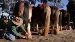 Draught Horse Breeders