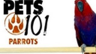 Pets 101- Parrots
